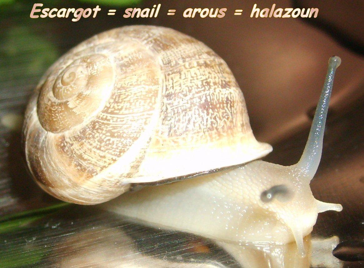 escargotsnailaroushalazoun1.jpg